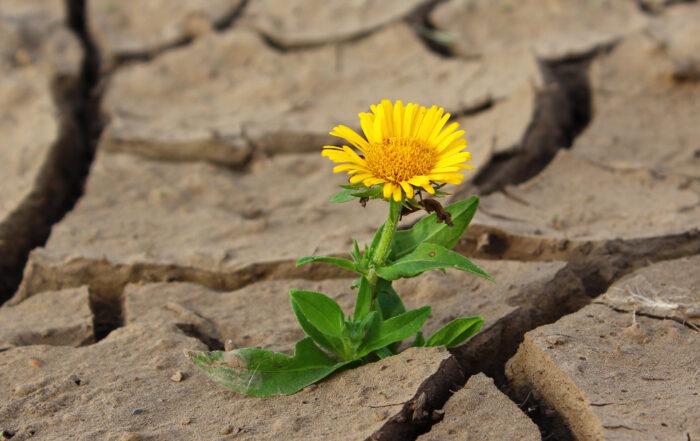 Naturheilpraxis Brunhilde Knauber Schwerpunktpraxis für Psychosomatik, Lebensbegleitung, Stress- und Krisenmanagement